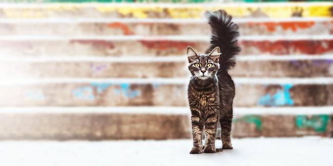A variety of catnip grades
